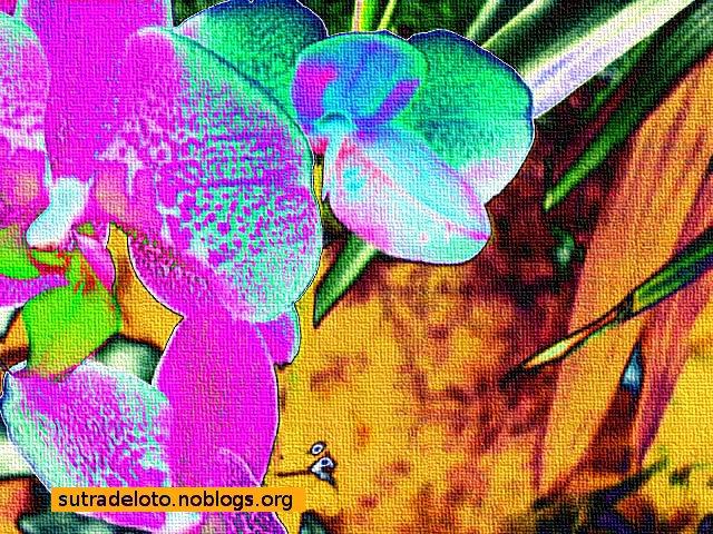 Fiori - serie4_img010 -Psicoimmagini -Gianni Casalini -2012 - mod. con GIMP