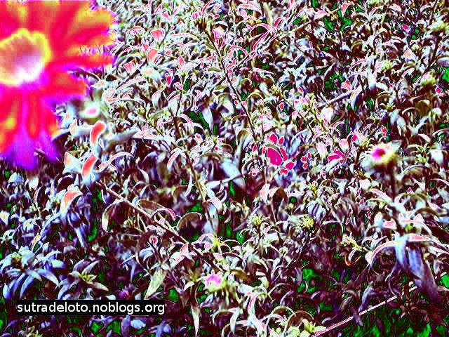 Psico immagini -fiori -serie6_img006 -Gianni Casalini 2012 -mod. con GIMP