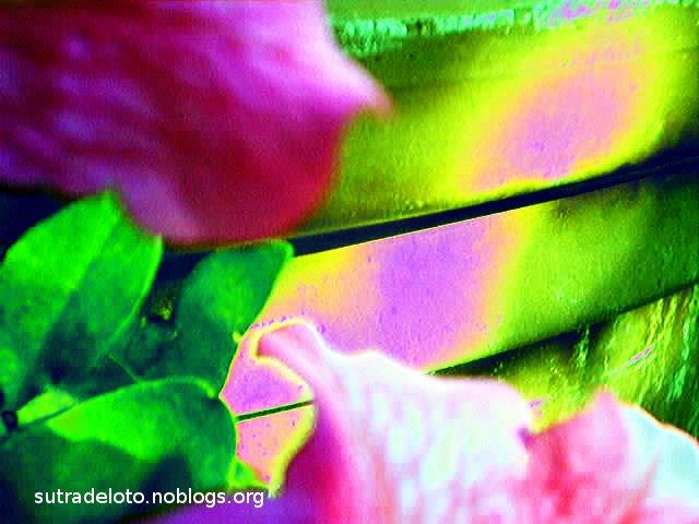 Psico immagini -serie_6_img002 - Gianni Casalini 2012 -mod. GIMP