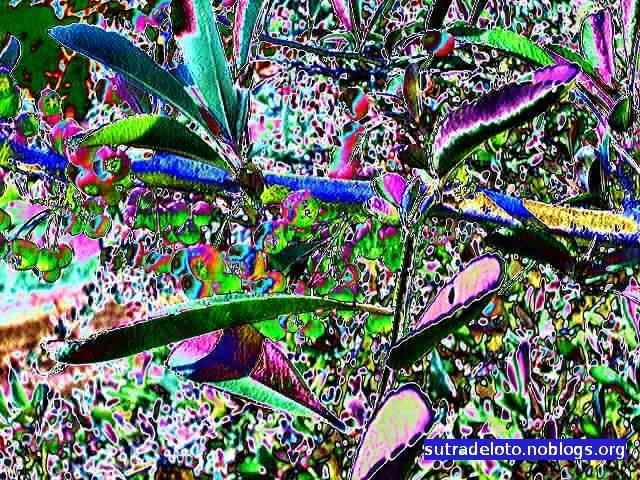 Psico immagini serie_6_img013 -Gianni Casalini 2012 -mod. GIMP